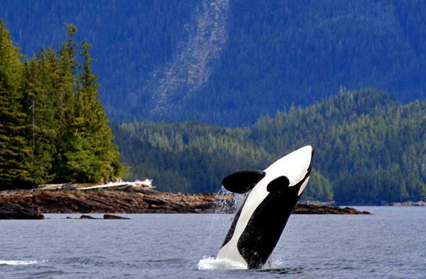 Ketchikan Wildlife Viewing Adventures Pete S Alaska Fishing Guide Service